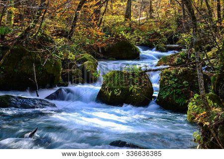 Oirase Stream In Sunny Day, Beautiful Fall Foliage