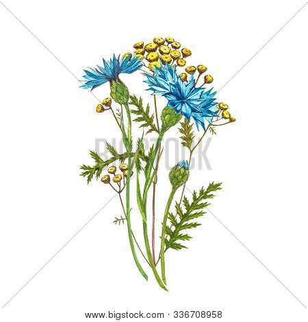 Blue Cornflower Herb Or Bachelor Button Flower Bouquet With Pansy Flowers Isolated On White Backgrou
