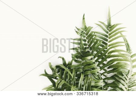 Fresh Fern Branch Green Leaves Isolated On White Background Of The Tropical Natural Which Has Jungle