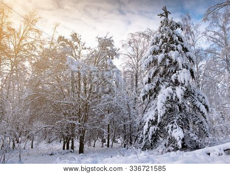 Winter Landscape. Forest In The Snow At Sunset Or Dawn. The Branches Of The Trees Are Covered With A