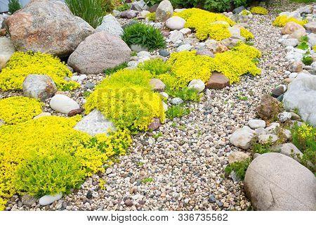 Rockery Rock Garden. Gardening Background. Gardener Backyard Design Element. Flowers Sedum Flowering