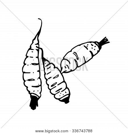 Carrots Line Art. Traditional Hand Drawing. Cartoon Style. Black Outline Isolated On White Backgroun
