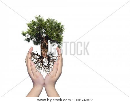 Concept or conceptual old green baobab tree with root held in hands and protected by a young woman isolated on white background,for nature,natural,environment,development,ecological,protection or life poster