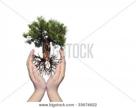 Konzept oder konzeptionelle alten grünen Baobab-Baum mit Wurzel in Händen gehalten und geschützt von einer jungen Frau, die ich