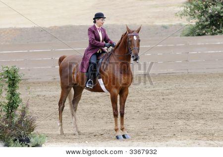 Woman Riding Saddlebred Horse