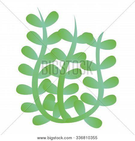 Algae Icon. Cartoon Of Algae Vector Icon For Web Design Isolated On White Background