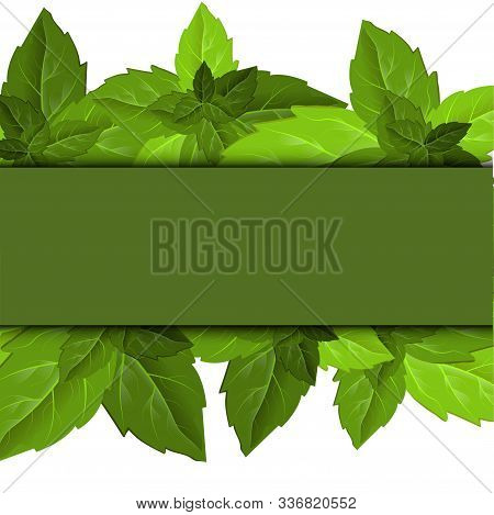 Forest Foliage. Leaf Texture. Green Leaves Frame Template. Beautiful Abstract Design Template With G