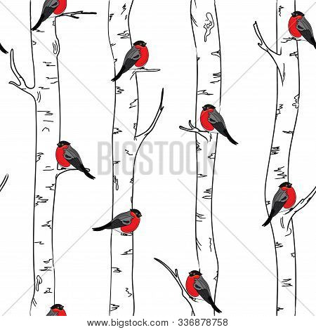 Seamless Pattern With With Bullfinches Stinting On White Birches. Vector