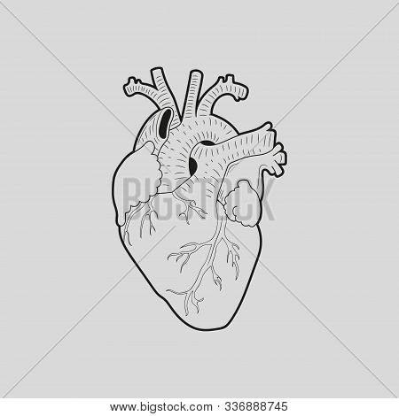 Human Heart Design Over Grey Background Vector Illustration.
