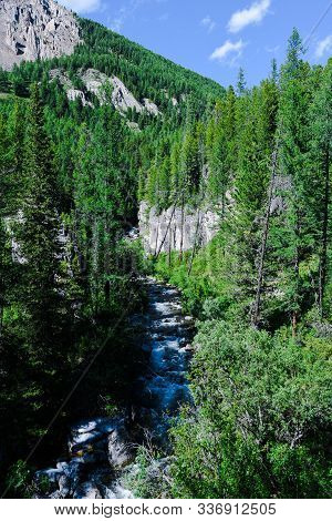 Mountain River In Siberian Taiga. Fast Stream In Coniferous Forest. The Nature Of Altai Mountains Fo
