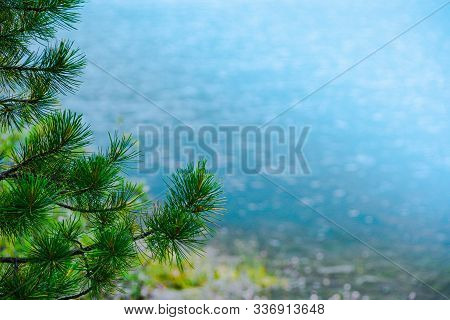 Pine Branches On Blue Lake. Coniferous Forest On Shore Of Turquoise Sea