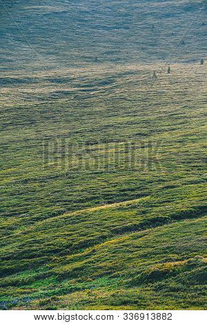 Gentle Green Hills. Pasture For Animals With Fresh Green Grass In Sunny Valley