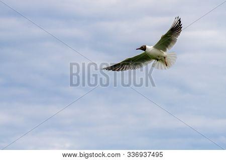 Terns In Flight Around Farne Islands Over The Blue Sky