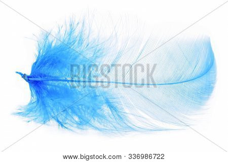 Blue Colored Bird Feather Or Plume Isolated On White