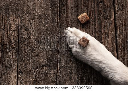 Kibble Or Dog Food Goodies Lying On A Paw On Wooden Table, Training And Upbringing, Topview