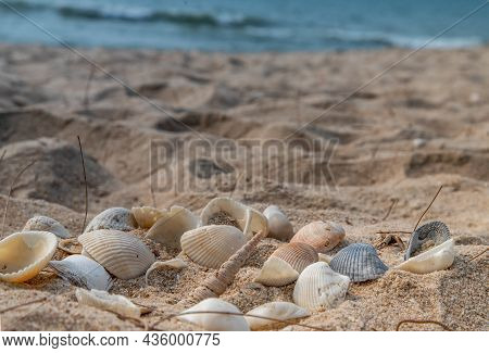 Seashell In Sand On The Beach And Copy Space. Sand Pattern Of A Beach In The Summer.