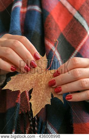 Stylish Red Female Nails. Fall Leaf In Hands. Modern Beautiful Manicure. Autumn Nail Design Concept