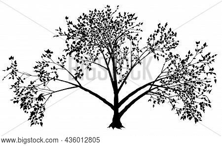 Deciduous Bushy Tree Silhouette - Black Detailed Illustration Isolated On White Background, Vector