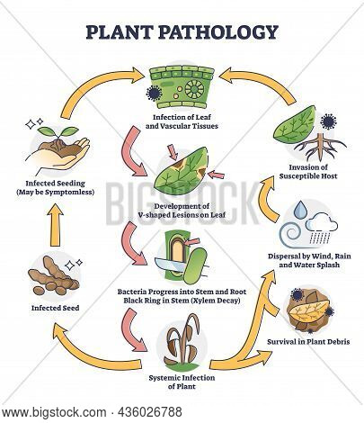 Plant Pathology With Bacteria Infection Spreading On Leafs Outline Concept. Labeled Educational Inva