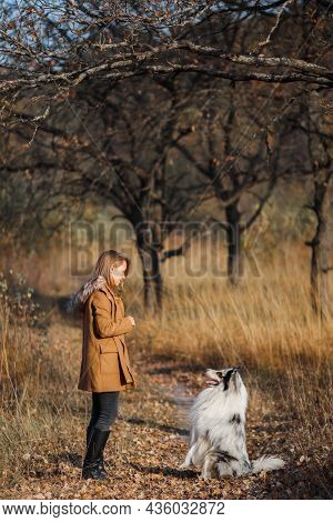 Blue Merle Rough Collie Sits In Front Of A Girl In A Yellow Autumn Park At Sunset