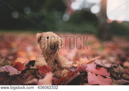 Teddy Bear Doll Sitting On Autum Leaves At Footpath. Front View Lost Bear Toy Looking Out Owith Sad