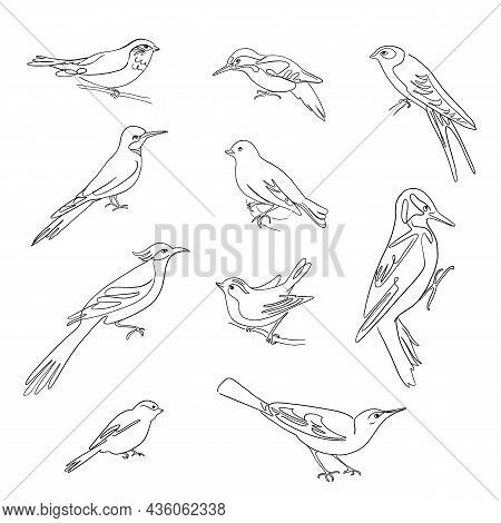 Birds Set Drawings, Continuous Line Illustration. Different Species, Linear Ink Art.