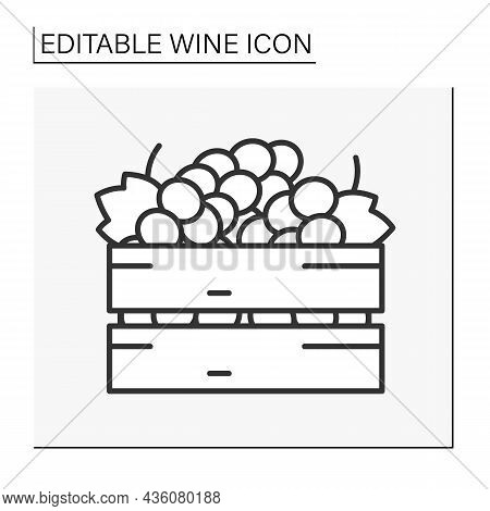 Ripe Grapes Line Icon. Grapes In A Box Ready For Wine Doing. Wine Concept. Isolated Vector Illustrat