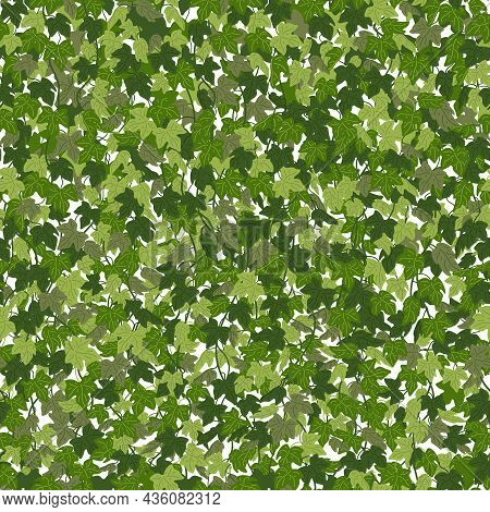 Ivy Background, Green Creeper Vines Curtain. Vector Illustration In Flat Cartoon Style.