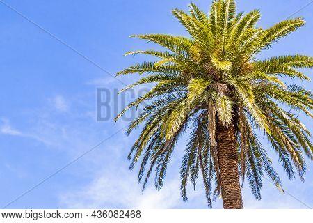 Palm Tree With Blue Sky Background San José Costa Rica.