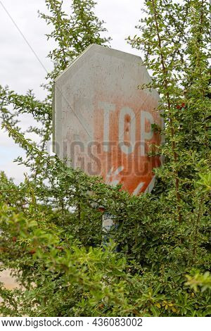 Obscure Traffic Sign Stop Covered With Bush Shrubs