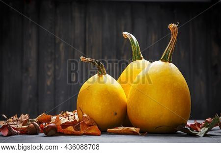 Autumn still life pumpkin with yellow leaves on gray concrete surface top view.