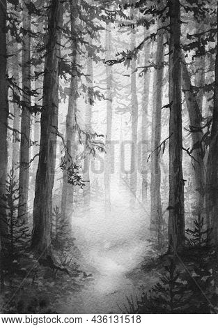 Hand Drawn Foggy Forest. Watercolor Painting Monochrome Illustration With Coniferous Trees And Path