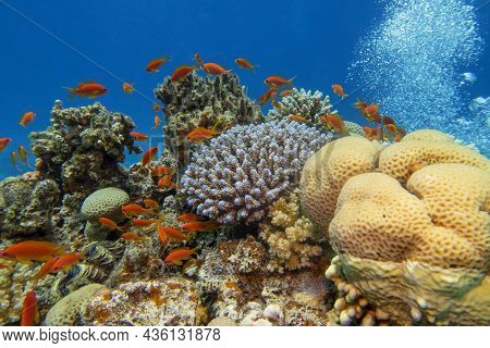Colorful, Picturesque Coral Reef At The Bottom Of Tropical Sea, Hard Corals And Fishes Air Bubbles,