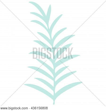 Leafy Twig Drawn Isolated Botanical Element. Elongated Sharp Sheets On A Branch, Trendy Greenery For