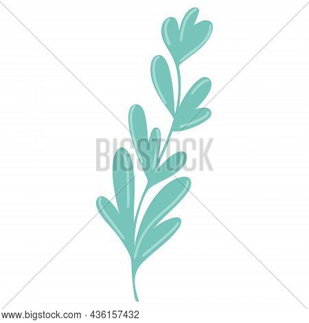 Graceful Twig With Elongated Leaves Drawn Isolated Botanical Element. Green Sheets On A Branch, Gree