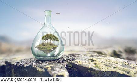Tree growing inside clear glass bottle . Mixed media