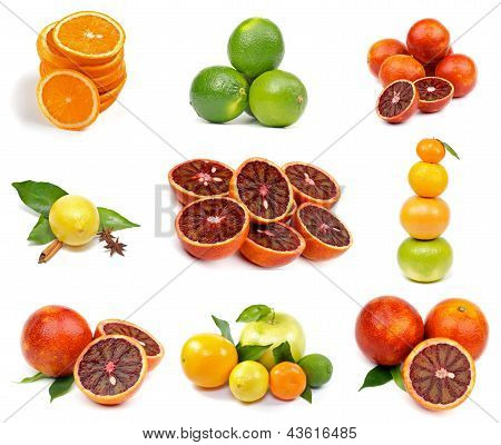 Citrus Collection