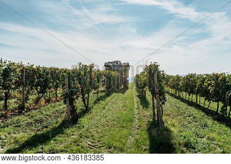 Combine Harvester Machine In Vineyard,south Moravia.wine Making Concept.agricultural Scene.harvestin