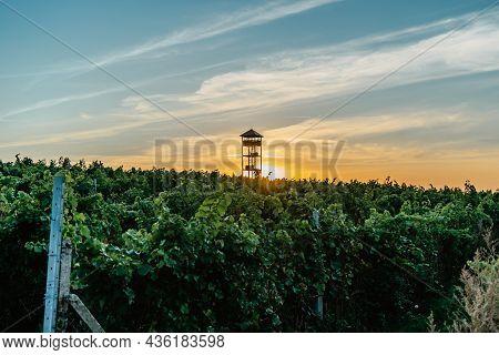 Fall Vineyards,palava Region,south Moravia,czech Republic.rural Landscape At Sunset, Panoramic View