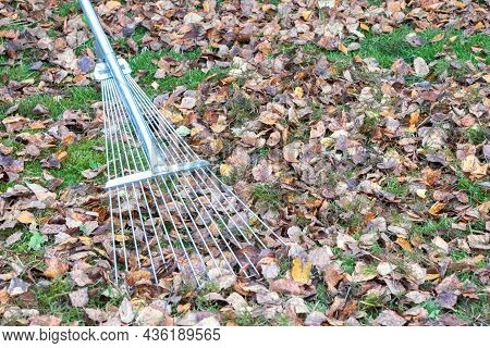 Fallen Leaves.removes Of Fallen Leaves.the Rake Removes Fallen Leaves.autumn Time.green Grass And Mo