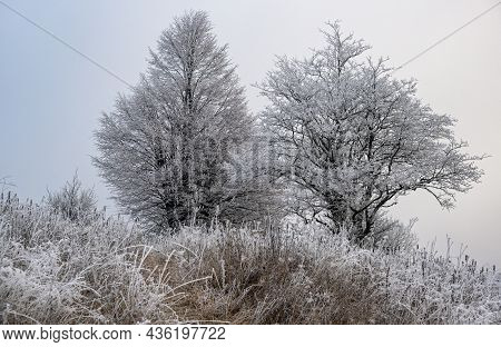 Winter Coming. Picturesque Foggy And Moody Pre Sunrise Scene In Late Autumn Mountain Countryside Wit
