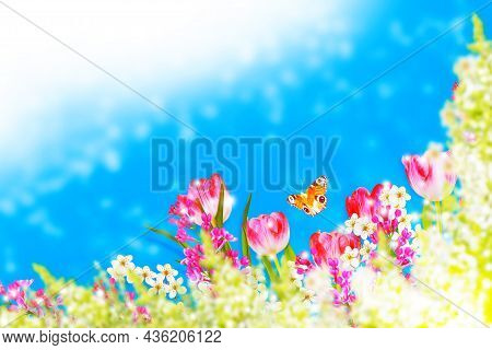 Nature. Blossoming Branch Apple, Tulips.  Bright Colorful Spring Flowers. Insects Butterflies