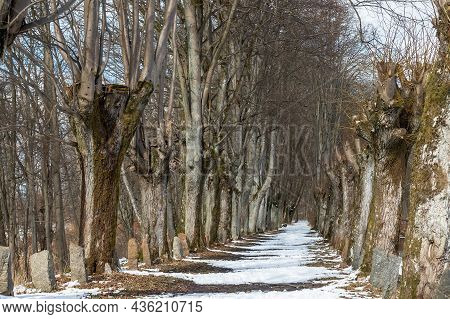 The Onset Of Spring In The Forest. A Forest Road In Early Spring. A Linden Alley Near The Lake.