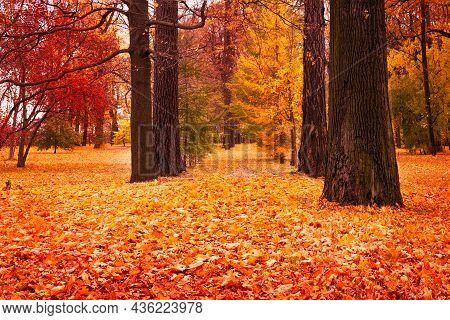 Beautiful Autumn Alley In The Park With Fallen Leaves, Road In The Forest In The Season Of Falling L