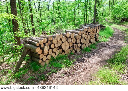 Timber Logs In The Forest . Pile Of Wooden Logs In The Woodland