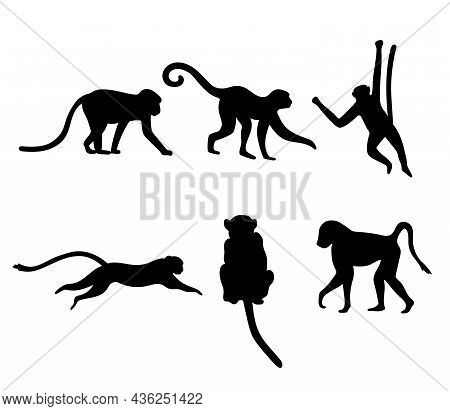 Set Of Different Monkey Silhouettes Isolated On White Background. Capuchin Monkey And Chimpanzee Han