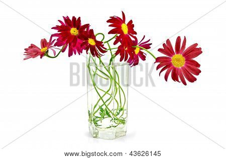 11_feverfew Crimson In A Glass.jpg