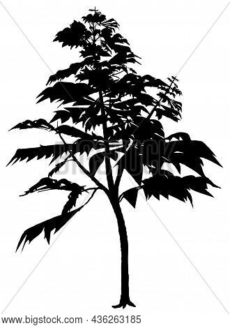 Deciduous Tree Silhouette - Black Illustration Isolated On White Background, Vector