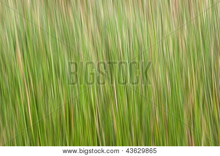 Abstract Green-yellow Background