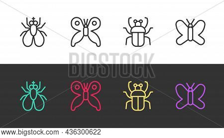 Set Line Insect Fly, Butterfly, Stink Bug And On Black And White. Vector